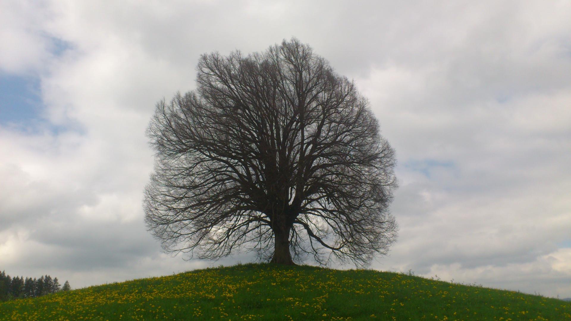 arbre nuages